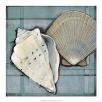 "Seashell Sketch II by Timothy O'Toole - 18"" x 18"""