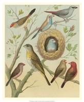 "Birdwatcher's Delight I by Cassell - 18"" x 22"" - $27.99"