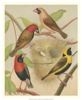 "Birdwatcher's Delight II by Cassell - 18"" x 22"" - $27.99"