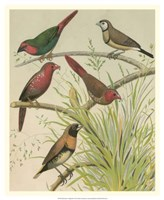 "Birdwatcher's Delight III by Cassell - 18"" x 22"" - $27.99"