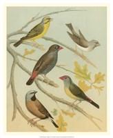 "Birdwatcher's Delight IV by Cassell - 18"" x 22"" - $27.99"