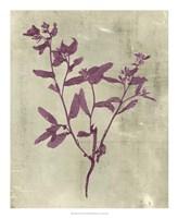 Impressions in Plum Fine Art Print