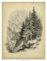 The Larch Fine Art Print
