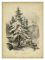 The Spruce Fine Art Print
