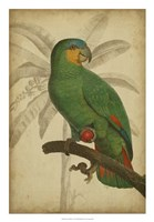 """Parrot and Palm I by Vision Studio - 18"""" x 26"""" - $31.49"""