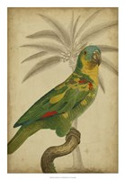"""Parrot and Palm II by Vision Studio - 18"""" x 26"""" - $31.49"""