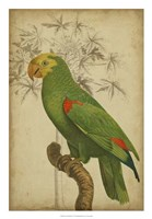 """Parrot and Palm III by Vision Studio - 18"""" x 26"""" - $31.49"""
