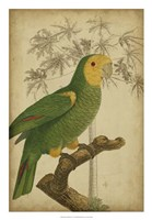 """Parrot and Palm IV by Vision Studio - 18"""" x 26"""" - $31.49"""