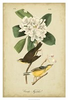"Audubon Canada Flycatcher by John James Audubon - 26"" x 38"""