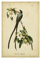 "Audubon Fork-tailed Flycatcher by John James Audubon - 26"" x 38"""