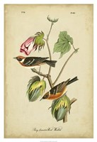 "Audubon Bay Breasted Warbler by John James Audubon - 26"" x 38"""