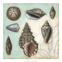 "Antique Shell Collage I by Megan Meagher - 20"" x 20"""