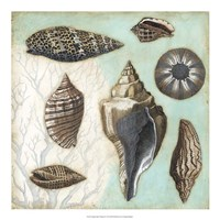 "Antique Shell Collage II by Megan Meagher - 20"" x 20"""