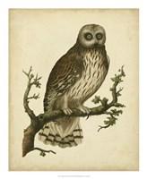 """Antique Nozeman Owl II by Nozeman - 18"""" x 22"""""""