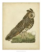 """Antique Nozeman Owl III by Nozeman - 18"""" x 22"""""""