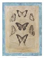 Bookplate Butterflies III Framed Print