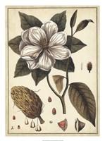 """Ivory Botanical Study I by Vision Studio - 20"""" x 27"""""""