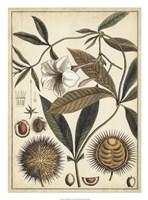 "Ivory Botanical Study II by Vision Studio - 20"" x 27"""