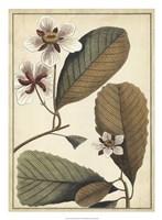 "Ivory Botanical Study III by Vision Studio - 20"" x 27"""