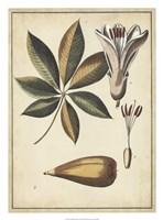 """Ivory Botanical Study IV by Vision Studio - 20"""" x 27"""""""