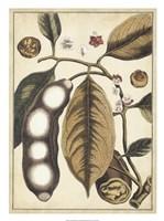 """Ivory Botanical Study V by Vision Studio - 20"""" x 27"""""""