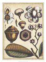 """Ivory Botanical Study VI by Vision Studio - 20"""" x 27"""""""