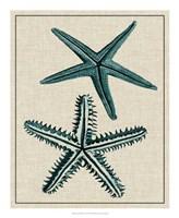 "Coastal Starfish I by Vision Studio - 18"" x 22"" - $27.99"