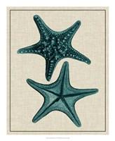 """Coastal Starfish II by Vision Studio - 18"""" x 22"""" - $27.99"""