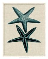 """Coastal Starfish III by Vision Studio - 18"""" x 22"""" - $27.99"""