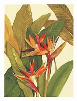 """Tropical Bird of Paradise by Timothy O'Toole - 20"""" x 26"""", FulcrumGallery.com brand"""