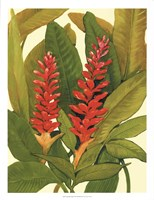"""Tropical Red Ginger by Timothy O'Toole - 20"""" x 26"""", FulcrumGallery.com brand"""