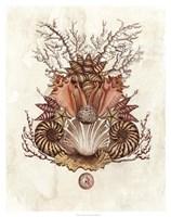 "Baroque Nautilus II by Naomi McCavitt - 28"" x 36"", FulcrumGallery.com brand"