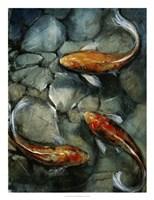 Tres Koi I Fine Art Print