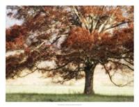 "Sunbathed Oak I by Danny Head - 26"" x 20"""