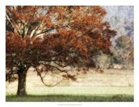 """Sunbathed Oak II by Danny Head - 26"""" x 20"""""""
