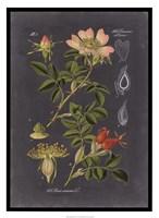 Midnight Botanical I Fine Art Print