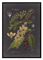 Midnight Botanical II Fine Art Print