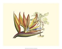 Bird of Paradise II Fine Art Print