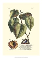 Royal Botanical I Fine Art Print