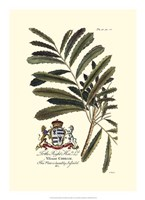 Royal Botanical III Fine Art Print