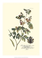 Royal Botanical IV Fine Art Print
