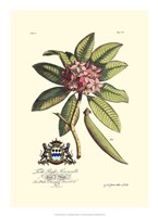 Royal Botanical V Fine Art Print
