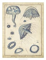 Medusa I Fine Art Print