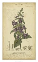 Floral Botanica IV Fine Art Print