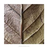 "Organic Elements II by Vision Studio - 17"" x 17"""