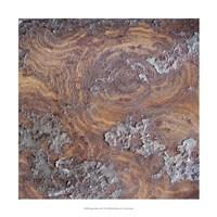 "Organic Elements IX by Vision Studio - 17"" x 17"""