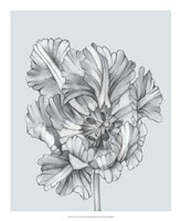 Silvery Blue Tulips I Fine Art Print