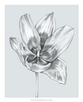 Silvery Blue Tulips II Fine Art Print