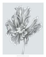Silvery Blue Tulips III Fine Art Print