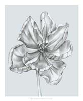Silvery Blue Tulips IV Fine Art Print